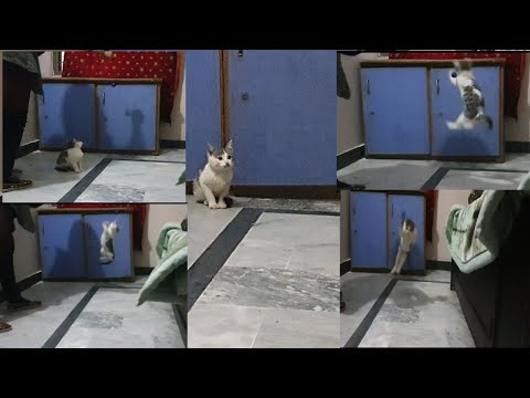 Funny Playing Jumping Cat Video