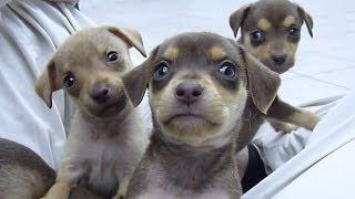 Cachorrinhos - Chácara DivertCão Hotel, Lazer e Diversão