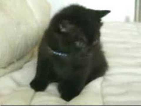 Funny Kitty Clips