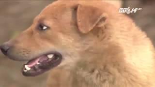 VTC14 | Từ tháng 9: không đeo rọ mõm cho chó bị phạt 800.000 đồng