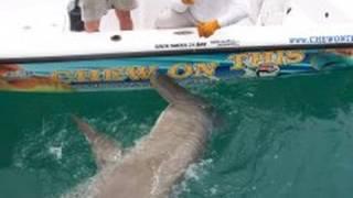 Shark Hammerhead 1000 Pound Monster! Giant Shark Fishing