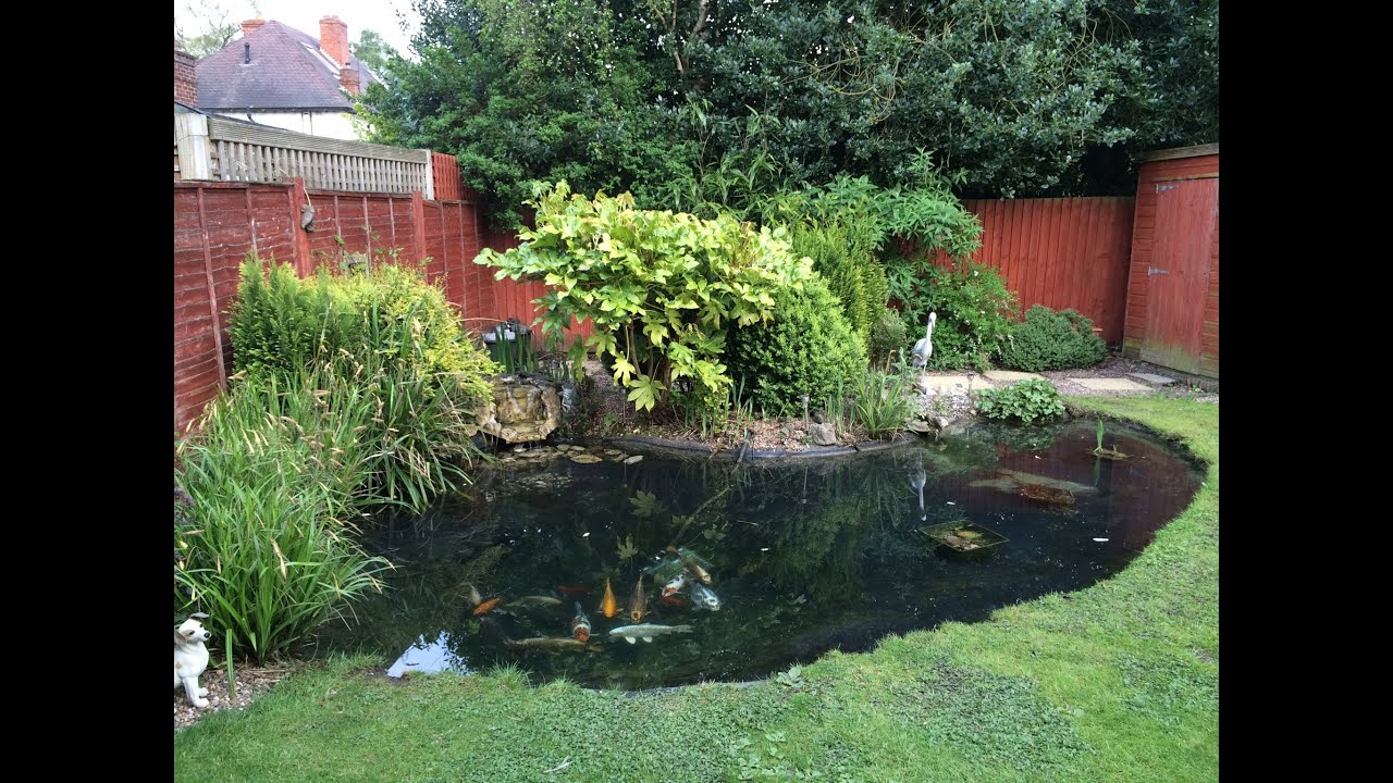 for Backyard pond maintenance