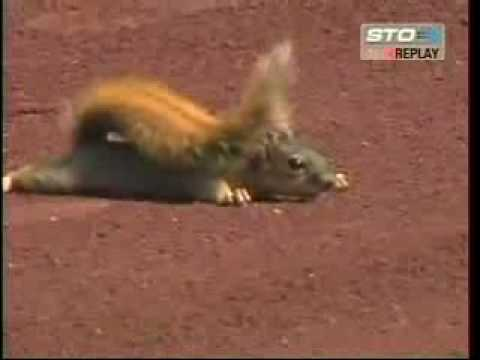 Squirrel takes over baseball game, A squirrel doesn't want to leave the game