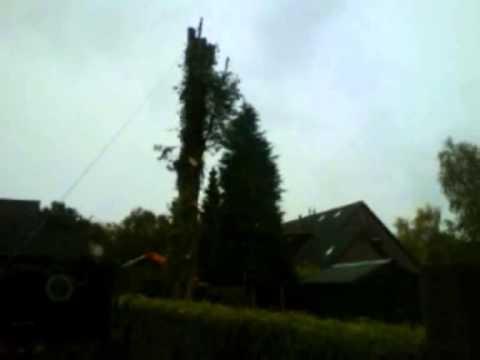 Grote boom omzagen