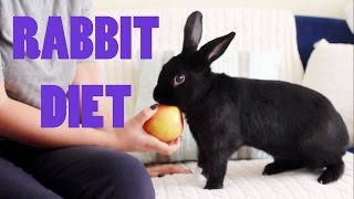 What Can Rabbits Eat? | Lennon's Diet