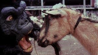 THE BLACK DAHLIA MURDER - Goat of Departure