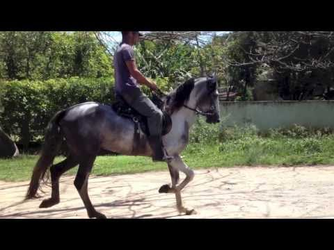 Gurú Rio Raso / Mangalarga Marchador - Filho do Traituba Brinquedo