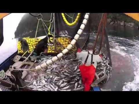 Wild Alaska Salmon Seining