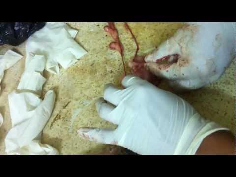 Aparato Urogenital Perro Anatomia Canina
