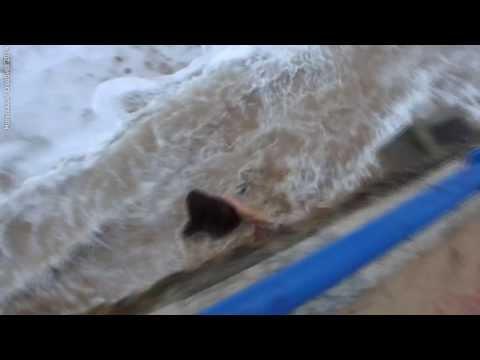 image vidéo Une femme emportée par une vague