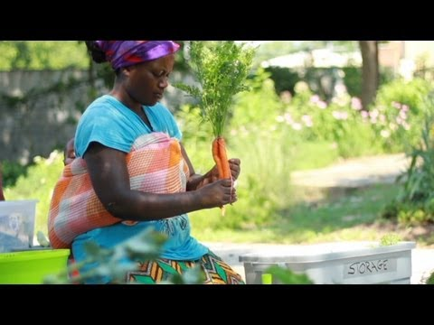 Urban farm gives refugees taste of home