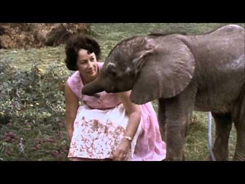 My Wild Affair: The Elephant Who Found A Mom