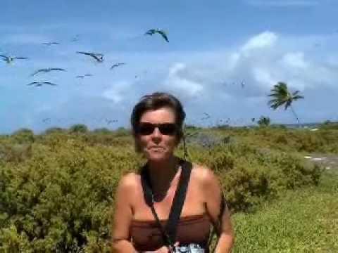 Nat & Dom avec les sternes des Aves au Venezuela