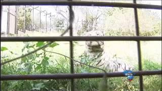 Joburg Zoo's new residents mark their territory