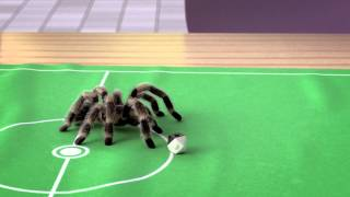 Football playing spider