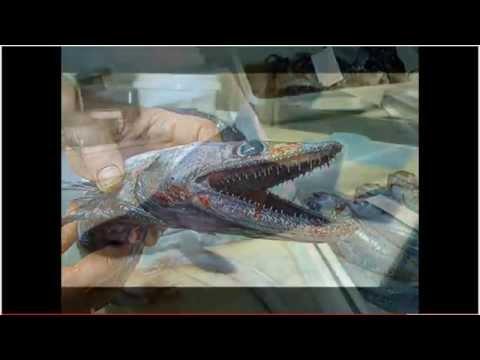 Strange japanese fish - photo#15
