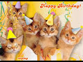 Happy Birthday Kittens - Happy Birthday ecards - Birthday Greeting Cards