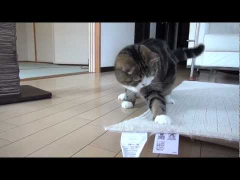 -Playing Maru 16.-, Maru loves this play.