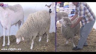 بالفيديو..هام للمغاربة بمناسبة عيد الأضحى..حْوالة من بلجيكا فيهُم غير اللحم بلا شحمة | بــووز