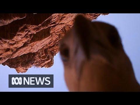 image vidéo Un aigle vole une caméra