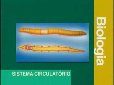 A 08 - Sistema Circulatório - Biologia - Vestibulando Digital