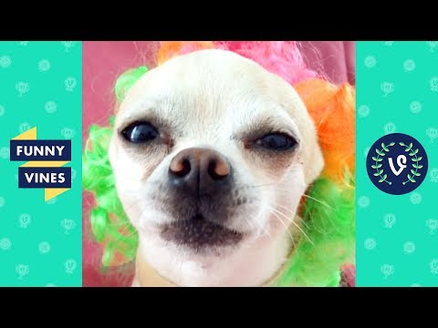 TRY NOT TO LAUGH - Funny Animals of the Year! | Best of the Year 2019