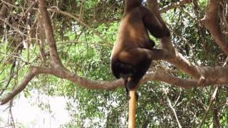 Dschungelcamp, Homöopathen, Medizin, Regenwald, Trailer