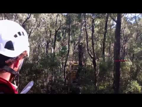 Bulldozing Leard State Forest around Greenpeace Activists