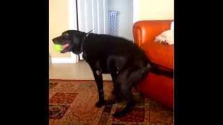 Dog Twerk