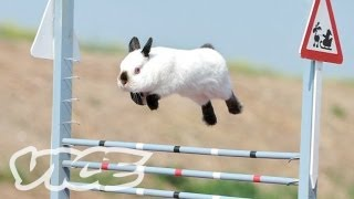 Cute Bunny Jumping Competition - Vice