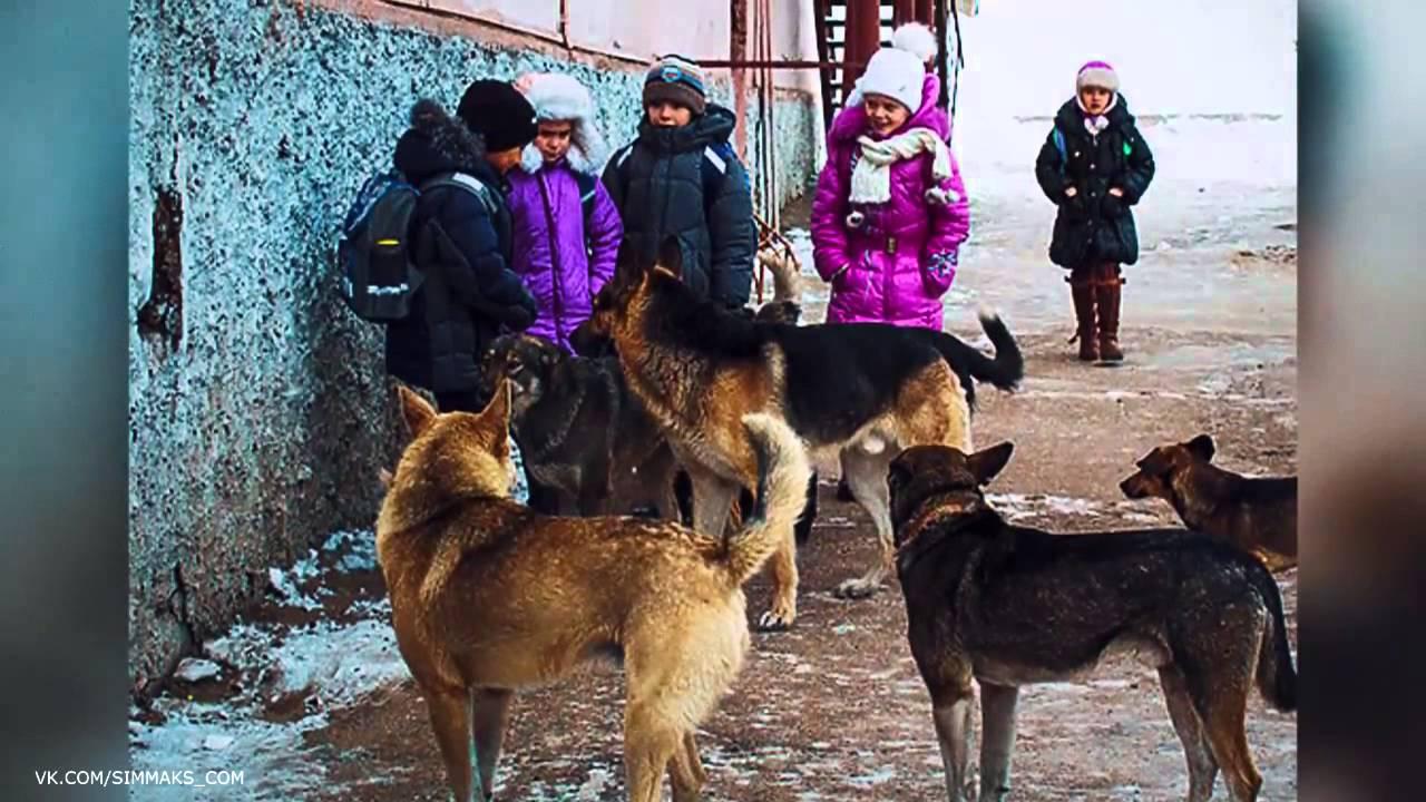 бродячие собаки в волгограде куда жаловаться дней ждать