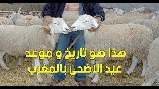 عاجل و بالفيديو..هذا هو تاريخ و موعد عيد الأضحى بالمغرب | بــووز
