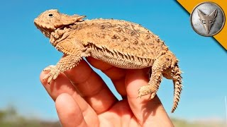 Lizard Covered in SPIKES?!