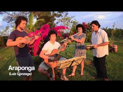 Araponga (Luiz Gonzaga)