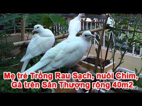 Mẹ trẻ Trồng Rau Sạch, nuôi Chim, Gà trên Sân Thượng rộng 40m2