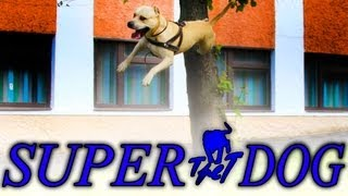 TRET - SUPER DOG From ukraine..