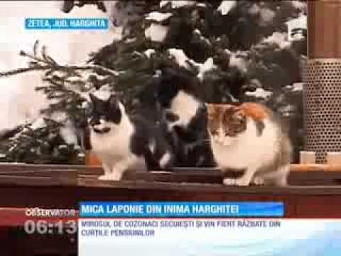 Mica Laponie din inima Harghtei Observatortv