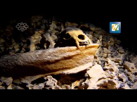 Entrevista con la arqueóloga Pilar Luna Erreguerena sobre hallazgo de