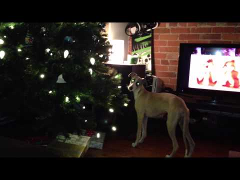 Puppy Loves Christmas (Trees)
