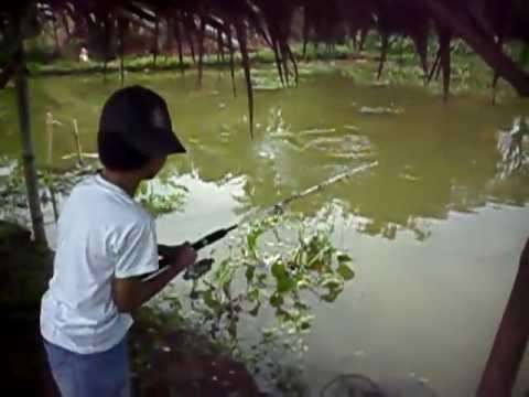 Mancing Ikan Bawal di SSB Pelita Jaya Sawangan part 4