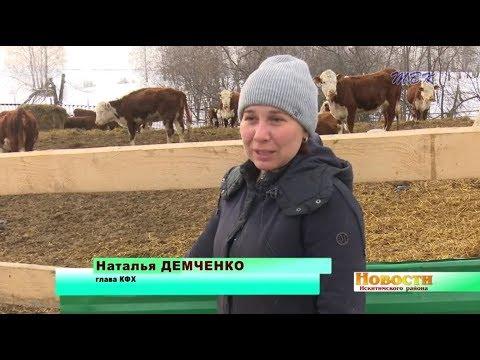 Бухгалтер-экономист Наталья Демченко нашла своё призвание в разведении герефордов