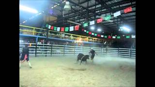 Video De Practicas De Monta De Toros Y Payasos De Rodeo