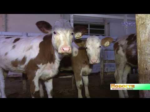 Коровы голодать не будут. Уничтоженному огнём сену в АО «Новоозёрское» нашли замену