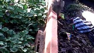anak sma mesum di hutan view on youtube.com tube online.