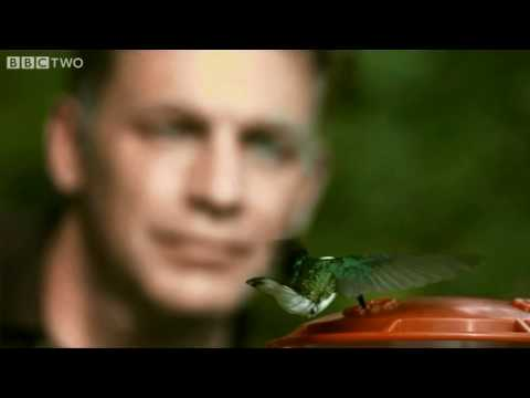 Spectacular Hummingbirds  - Secrets of our Living Planet - Episode 1 - BBC Two