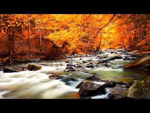 Musique Relaxante Nature - Forêt et Ruisseau - Relaxation, Dormir