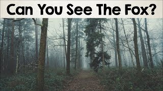 Nobody Can See All The Hidden Animals । Optical Illusions । Brain Teasers [#2]