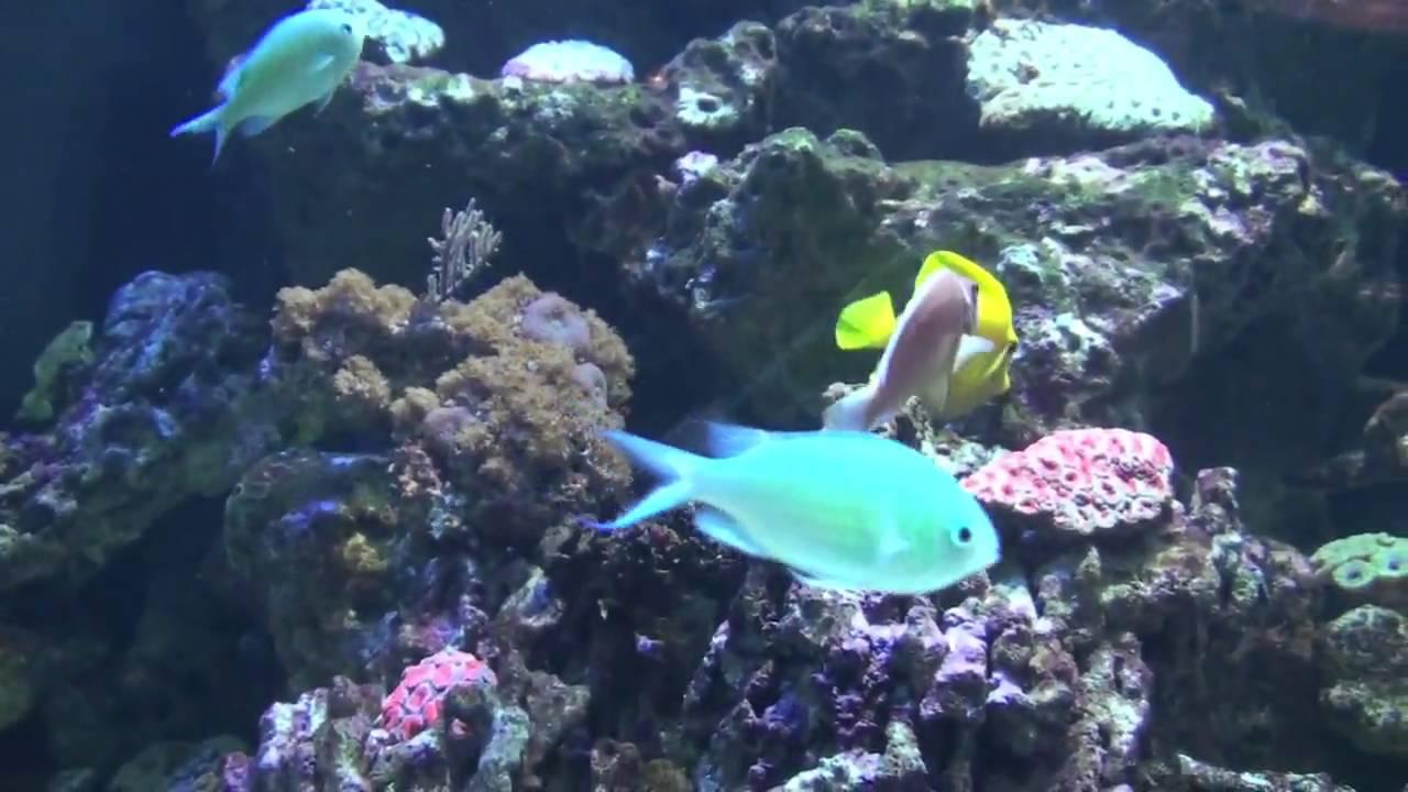 Aquarium Of The Bay San Francisco Youtube