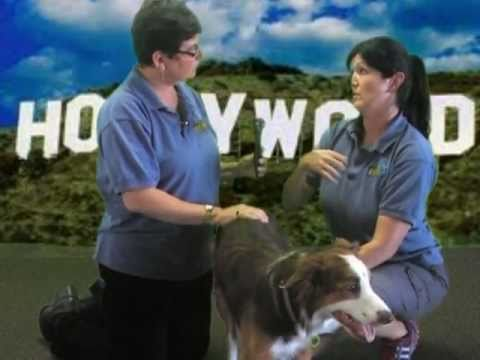 "The Villa La PAWS Canine Academy Presents ""Hollywood Dogs"""