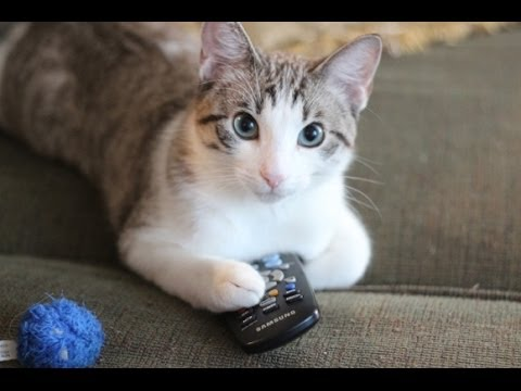 Funny Cats Video - Funny Cat Videos Ever- Funny Videos 2014 - Funny Animals Funny Animal Videos